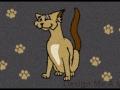 cat_mat_02